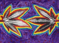 cannabis influencer
